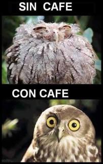 memes-café